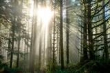 Sun Through Trees in Natural Oregon Landscape - 189530165