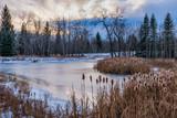 Frozen pond with cattails in Winter  - 189533326