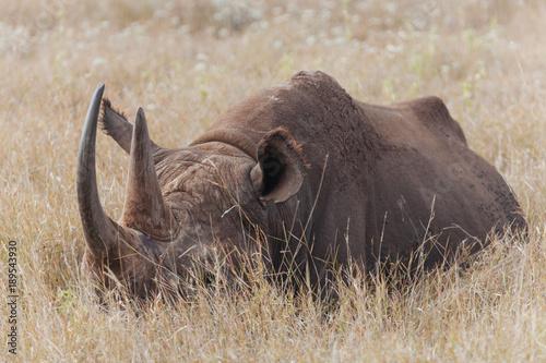 Aluminium Bison Rhinoceros in Nature