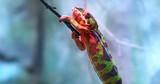 Beautiful chameleon on tree branch - 189560373