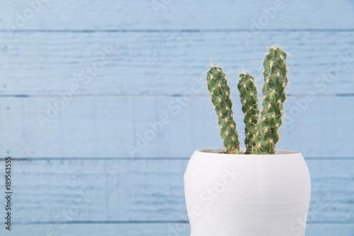 Mały kaktus na błękit malować deskach