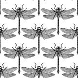 Seamless pattern with hand drawn dargonfly. Vector insects sketch collection. Vinatge spring background. Pastel colored.