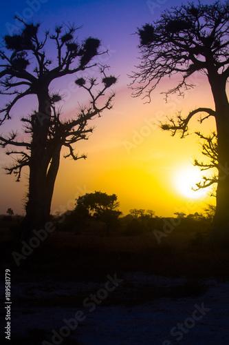 Fotobehang Baobab coucher de soleil