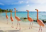 Flamingo on the beach, Aruba island - 189587312