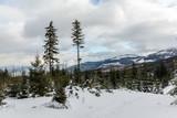 Trail through the winter forest in Karkonosze mountain, Sudety, Poland