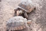 Turtle, Tortoise, Soft-shell turtle Land turtles, one of the Testudines, are classified in cold blooded fauna. In the reptile layer The turtles are th