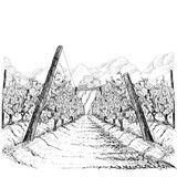 Vineyard landscape with clouds and building on the hill. Hand drawn sketch vector illustration on white - 189604179
