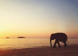 silhouette of elephant on the beach - 189606356