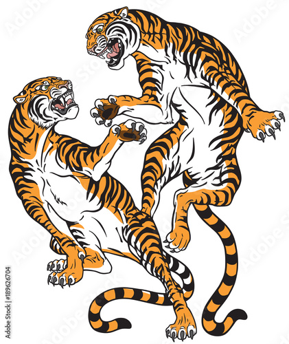 Fototapeta pair of tigers in the battle . Two fighting big cats . Tattoo style vector isolated illustration
