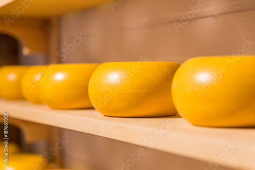 Traditional process of making Dutch cheese Gouda Poster