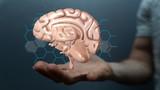 brain idea - 189673167
