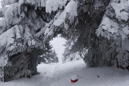 Fotobehang Weg in bos Zimowy las w Górach Bialskich