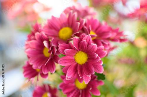 Papiers peints Nature flower close up