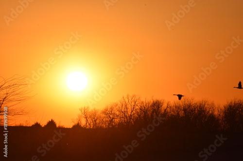 Fotobehang Bruin Winter Sunset