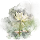 Watercolor painting (retouch) illustration of blossom white lotus. Artistic floral abstract background. - 189720514