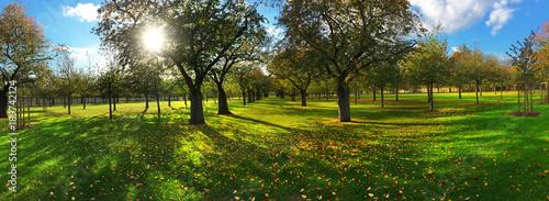 Wiese mit Bäumen im Sommer als Panorama - 189742124