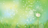 Vector spring  nature  background,  dandelion on green  bokeh background.