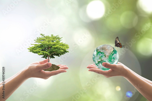 Leinwanddruck Bild Reforestation, sustainable world forest, and tree care day concept: Elements of this image furnished by NASA.