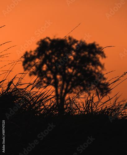 Aluminium Oranje eclat Sunset