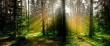 Fototapeta Las - jesień w iglastym lesie © Janusz Lipiński