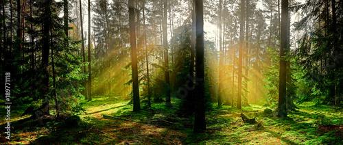 jesień w iglastym lesie