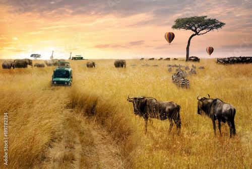 Fototapeta Dreamy African Wildlife Safari Scene