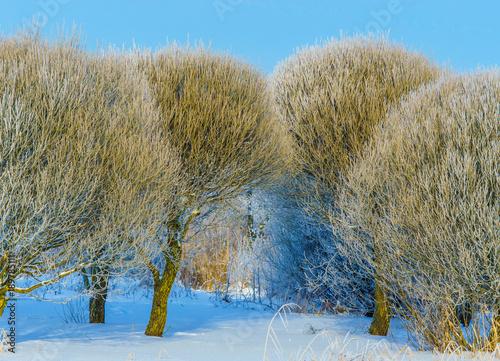 Foto op Aluminium Blauw Winter frosty day outside the city