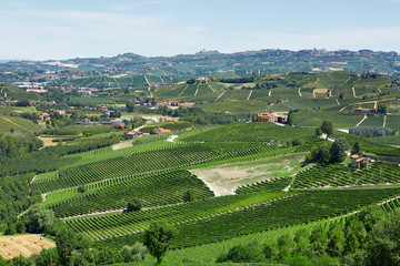 Green countryside with vineyards in Piedmont, Italy
