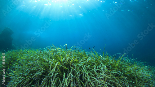 Poster Water planten Underwater green grass blue water