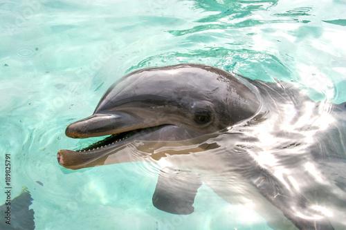Fotobehang Dolfijn Dolphin Says Hello