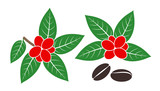 Coffee plant. Isolated coffe beans on white background