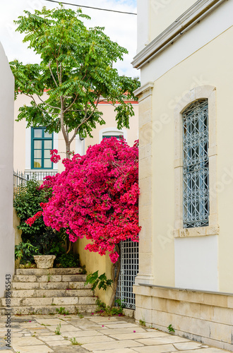 City street with blooming bougainvillea. The historic centre of Samos town, Samos island, Greece
