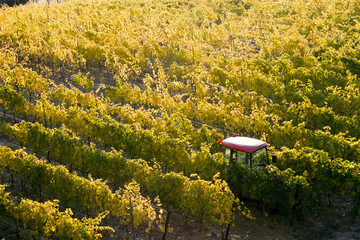 Okanagan Valley Autumn Vineyard