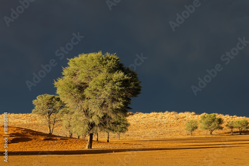 Desert landscape against a dark sky of an approaching storm, Kalahari desert, South Africa.