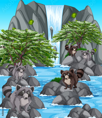 Foto op Aluminium Donkergrijs Waterfall scene with many raccoons