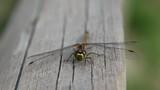 Dragonfly Macro - 189888914