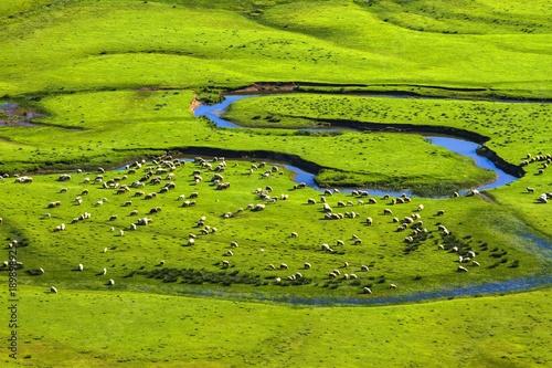 Fotobehang Pistache dere ve yeşillik