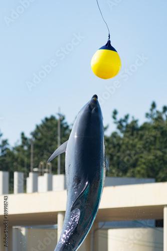 Fotobehang Dolfijn イルカのジャンプ