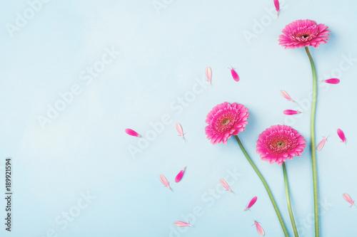 Piękna wiosny menchia kwitnie na błękitnym pastelowym stołowym odgórnym widoku. Granica kwiatowa. Płaskie świeckie stylu.