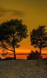 Bäume im Sonnenuntergang Kroatien