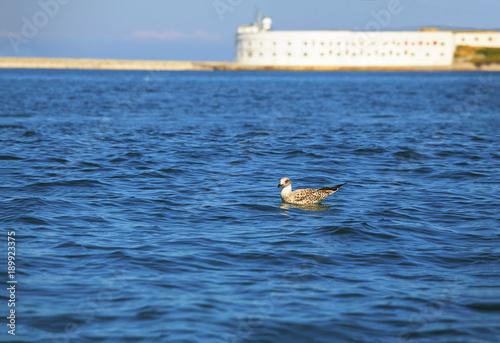Fotobehang Zeilen seagull on blue water