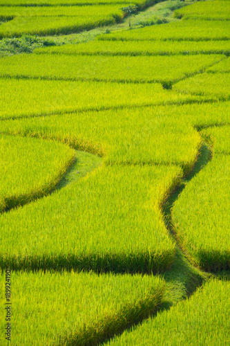 Foto op Canvas Pistache Green Terraced Rice Field in Nan, Thailand.
