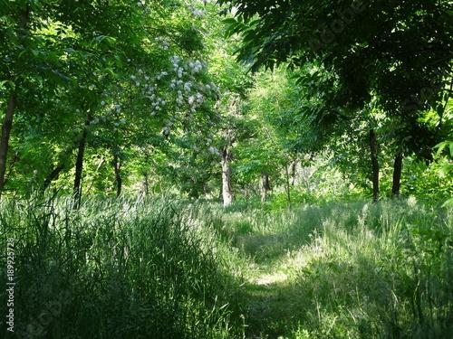 Fotobehang Olijf Path in the woods