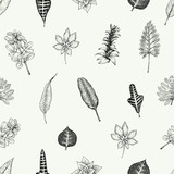 Seamless batanical pattern in vintage style. Leaves and plants. Retro illustration. Vector design elements. Floral background. - 189953798