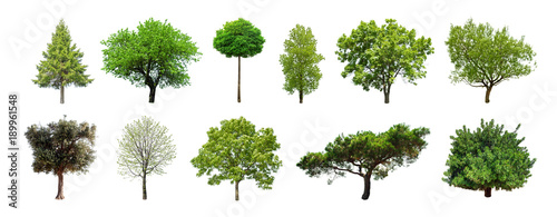 Set of green trees isolated on white background. Different kinds of tree collection - 189961548