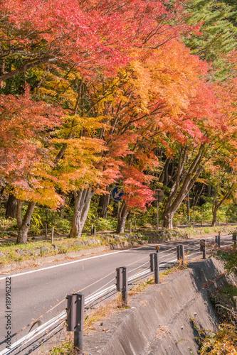 Aluminium Baksteen 日本の秋 河口湖畔の風景 もみじトンネル