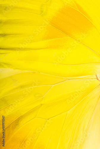 Fotobehang Fyle Orange-barred sulphur (Phoebis philea) butterfly wing macro