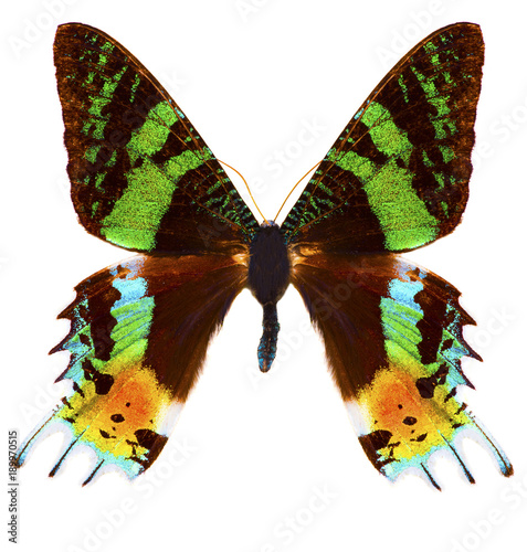 Aluminium Fyle Madagascan sunset moth (Chrysiridia rhipheus) butterfly isolated