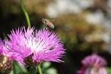 Pollinisation près d'une plante vivace - 189979770