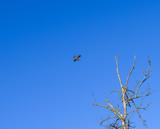 Flugzeug fliegt durch die Luft, stahlblauer Himmel, kahler Baum ohne Blätter im Vordergrund